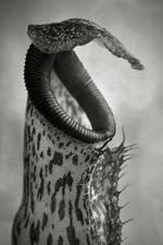 2019 Group Show: Beth Moon – Nepenthes Coccinea