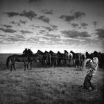 Adam Jahiel: Remuda, IL Ranch, 1995