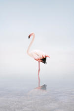 Alice Zilberberg: For Now Flamingo