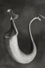Beth Moon: Nepenthes Miribilis