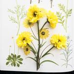 Cig Harvey: Specimens, 2016