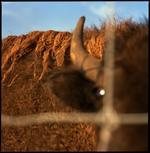 Colleen Plumb: Buffalo Farm