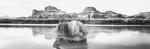 David H. Gibson: Branch Draped Boulder, Colorado River, Utah, 1991