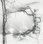 David H. Gibson: Vine and Tree, Village Creek, Texas, 1987