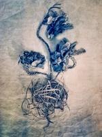 Diana Bloomfield: Ornamental Kale, 2018