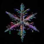 Douglas Levere: Snowflake 2015.01.25.003