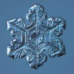 Douglas Levere: Snowflake 2014.03.23.005