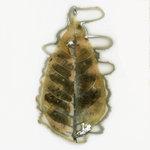 Edward Bateman: Leaf No. 15