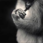 Hiroshi Watanabe: Fukunosuke's Hands, Suo Sarumawashi