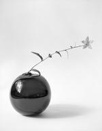 James Pitts: Forsythia in Black Round Vase