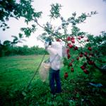 Jane Alden Stevens: Removing Outer Bags #1, Fall, Aomori Prefecture