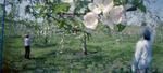 Jane Alden Stevens: Hand Pollination #3, Spring, Aomori Prefecture, 2012