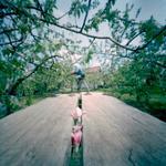 Jane Alden Stevens: Culling Blossoms #2, Spring, Aomori Prefecture