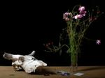 Justine Reyes: Still Life with Photographs and Skull