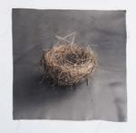 Kate Breakey: Nest 9