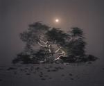 Kate Breakey: Tree of Life, Mesquite, Full Moon Rising, Bahrain