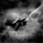 Keith Carter: Apple Slice