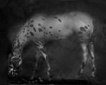 Keith Carter: Leopard Appaloosa, 2014
