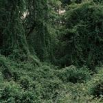 Kevin Kunishi: Sandinista MI-24 Crash Site, Between Pantasma and Quilalí, 2010