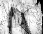 Lauren Semivan: Untitled (May), 2011