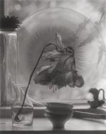 Elvira Piedra: Bell Flower, El Rito, 2001