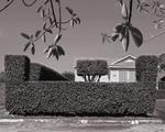 Mark Surloff: Hedges and Leaves