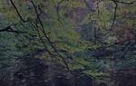 Michael Lange: WALD | Landscapes of Memory #0299
