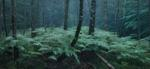 Michael Lange: WALD   Landscapes of Memory #0095