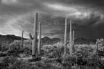 Mitch Dobrowner: Saguaro and Storm, 2017