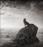 Nick Brandt: Cheetah on Termite Mound, Maasai Mara 2008