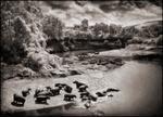 Nick Brandt: Hippo River, Maasai Mara, 2002