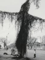 Pentti Sammallahti: Odessa, Ukraine, 2004
