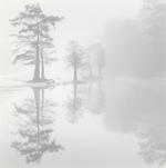 Photo Objects & Small Prints: David H. Gibson, Cypress Island, Village Creek, Texas