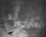 Raymond Meeks: Crow, fence   Montana  2001