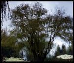 Susannah Hays: Mirror Landscape 1
