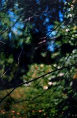 Terri Weifenbach: 1 August 1998 (Diptych)