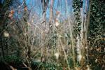Terri Weifenbach: Woods 03, 2009