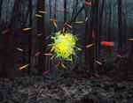 Thomas Jackson: Glow Sticks no. 2, Stone Ridge, New York, 2013