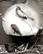 Zoë Zimmerman: Autumn Birds, 2006